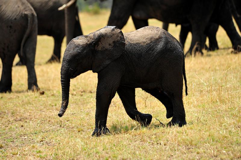 Africa 2010-060.JPG