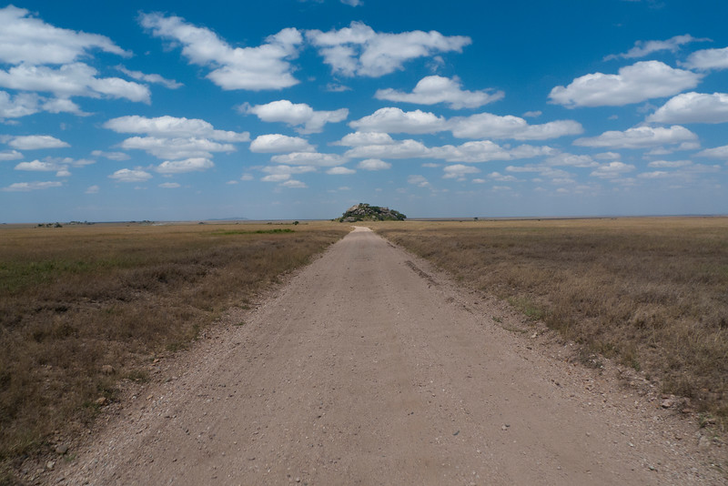 Barafu Kpjes in Serengeti.jpg