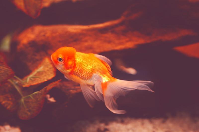 fish0.jpg