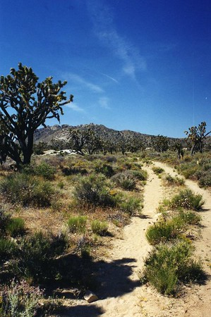 East Mojave (Mojave National Preserve): Trips