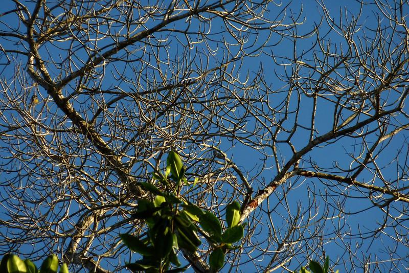 Beautiful Higuera Trees