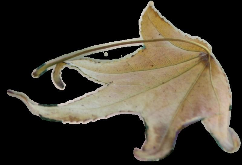 Leaf 20.png