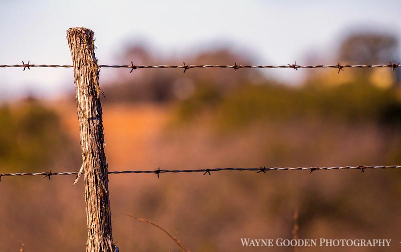 wayne-gooden-fencepost.jpg