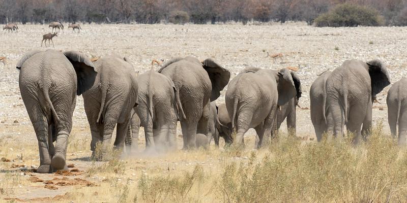 Namibia E4A5044.jpg