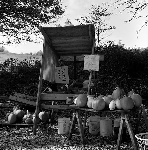 Roadside Pumpkin Stand, Smithfield, NY. October 2014