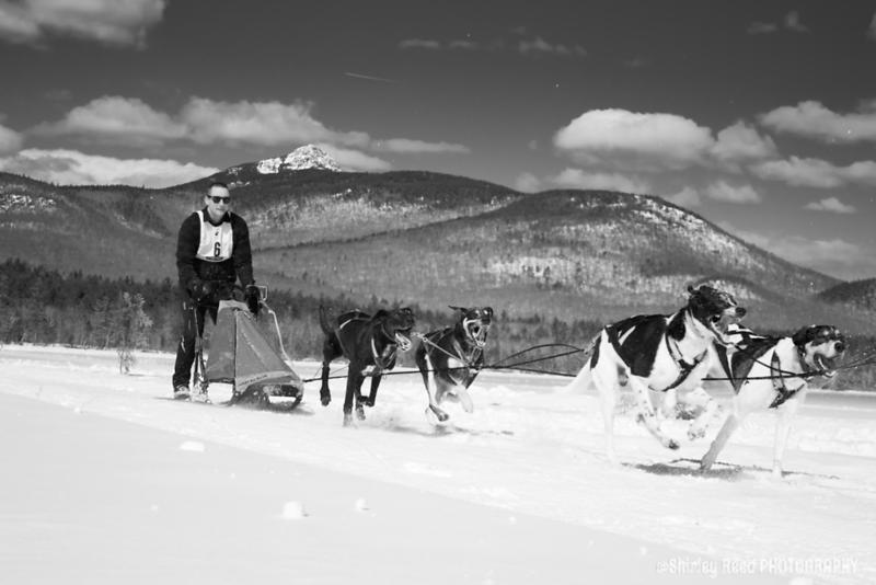 Tamworth Dog Sled Race