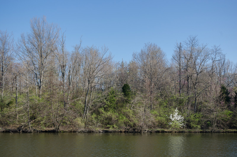 Springtime at Sharon Lake in Sharon Woods, Cincinnati.