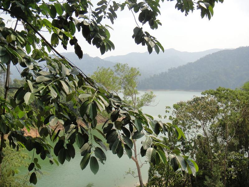 Belum Rainforest (10).JPG