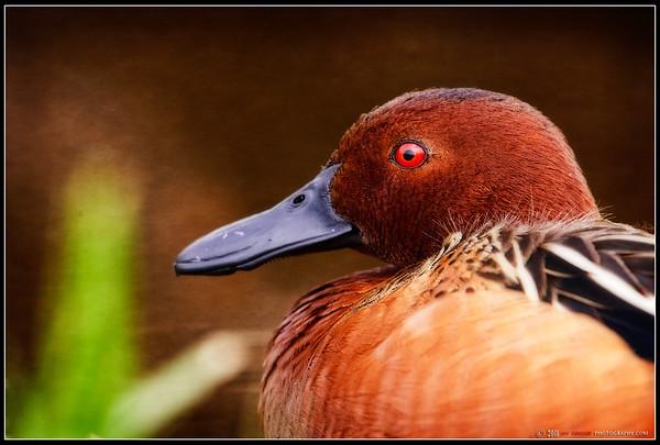 Bird Images 2