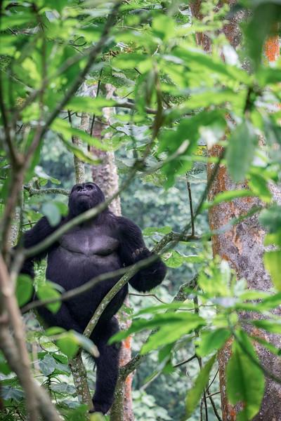 Uganda_T_Gor-2477.jpg