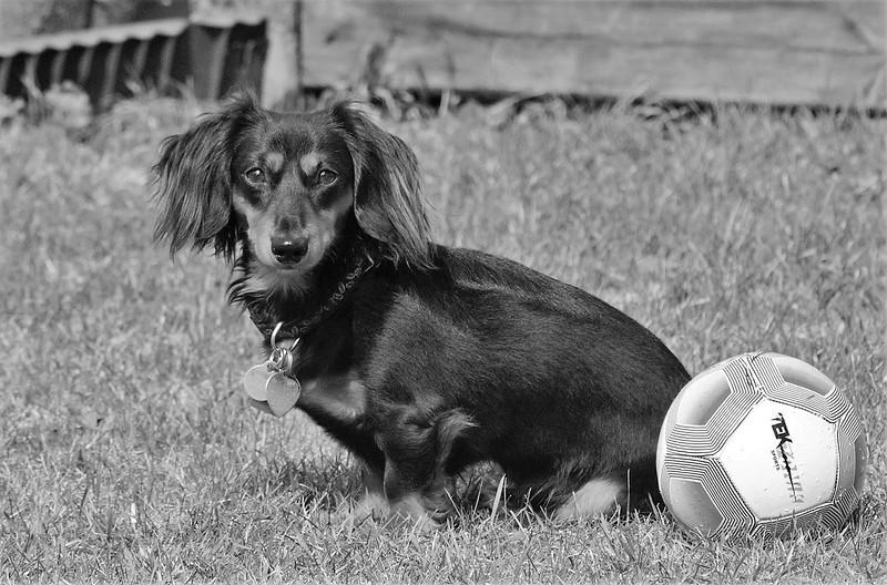 MCC4 Bert Schaffeur Soccer pup.jpg