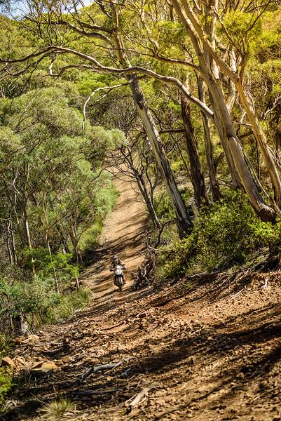 2019 KTM Australia Adventure Rallye (568).jpg