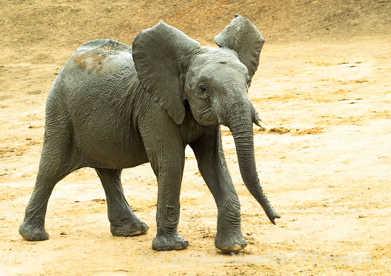pics for Africa anniversary - 6-2.JPG