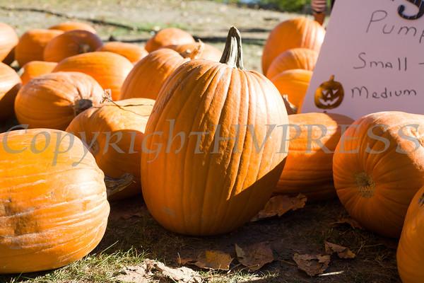 Beacon Pumpkin Festival