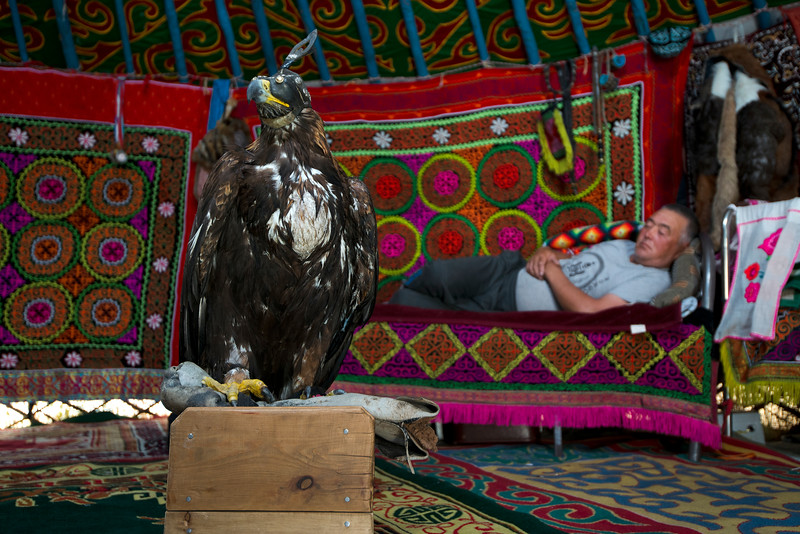 During the winter the eagle sleeps inside the yurt with the family. It would not survive the extreme cold outside.