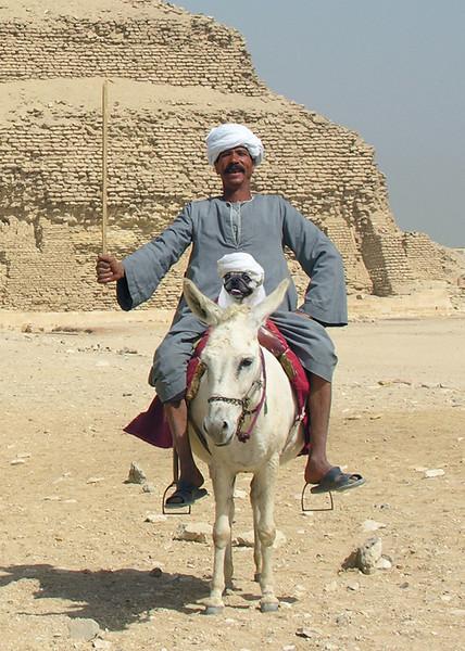 TOUR GUIDES - SAQARRA, EGYPT