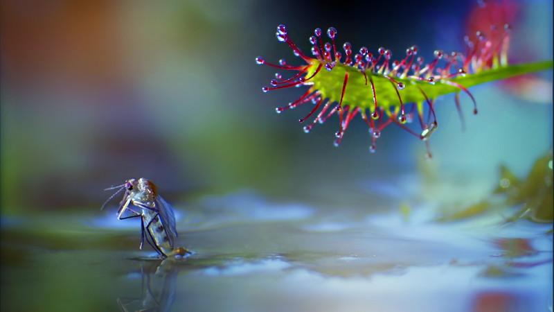Bugs and Beetles - 169.jpg
