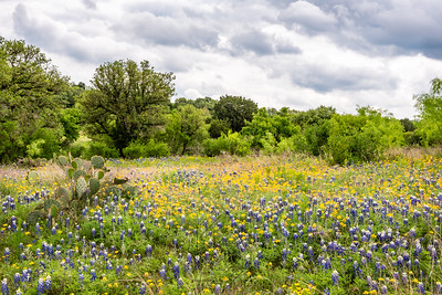 Field of yellow wildflowers mixed with bluebonnets