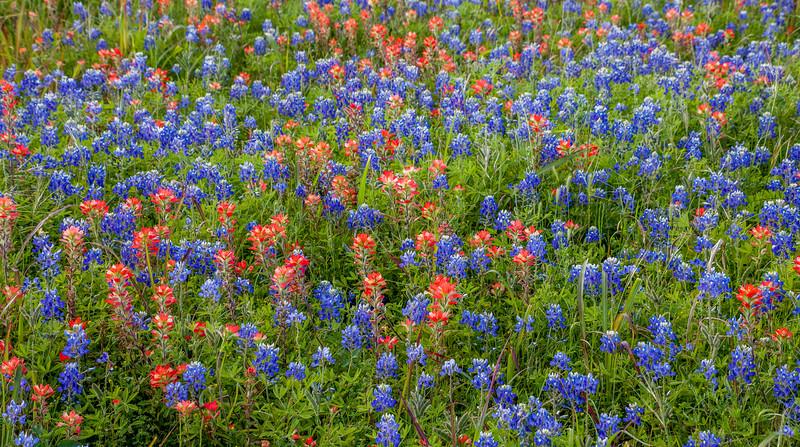 2016_4_9 Texas Wildflower Shoot-8860.jpg