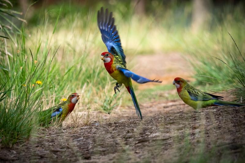 122118  birds  .JPG