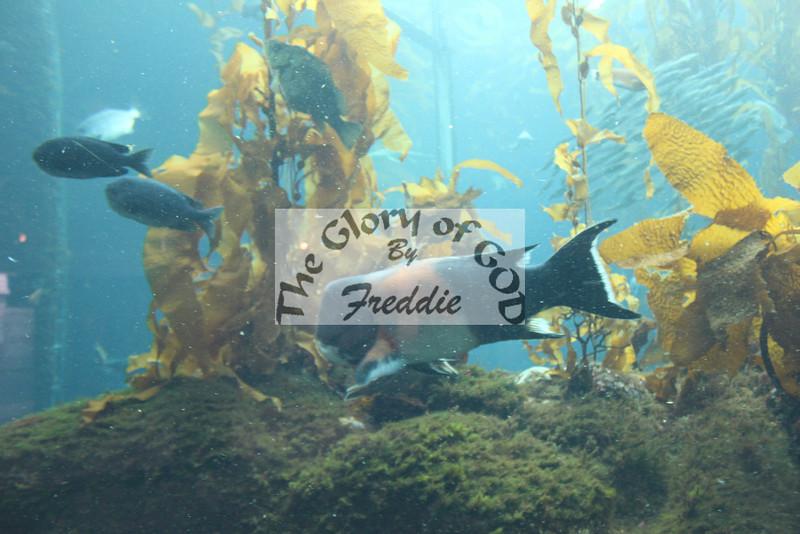 Aquarium 20142.jpg