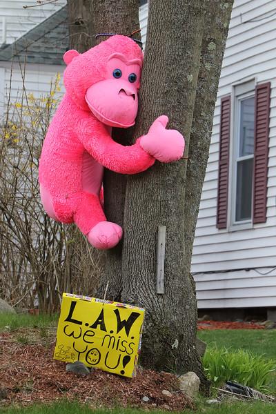 Stuffed chimp on tree in Shirley 042820