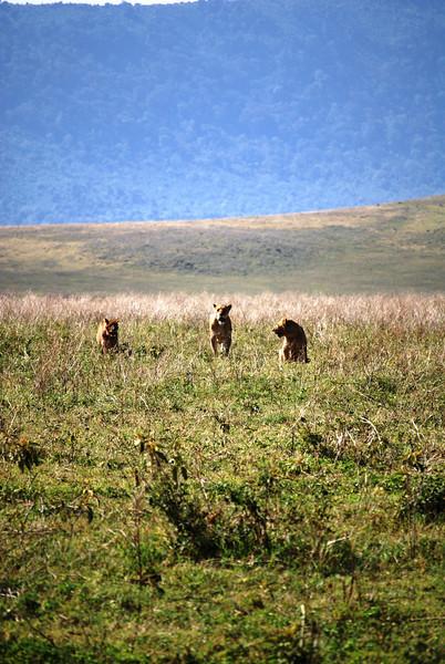 Ngorongoro (56).JPG