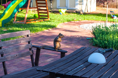 2013-05-11 - Squirrel Buffet