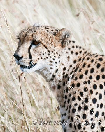 2012 Kenya, Africa