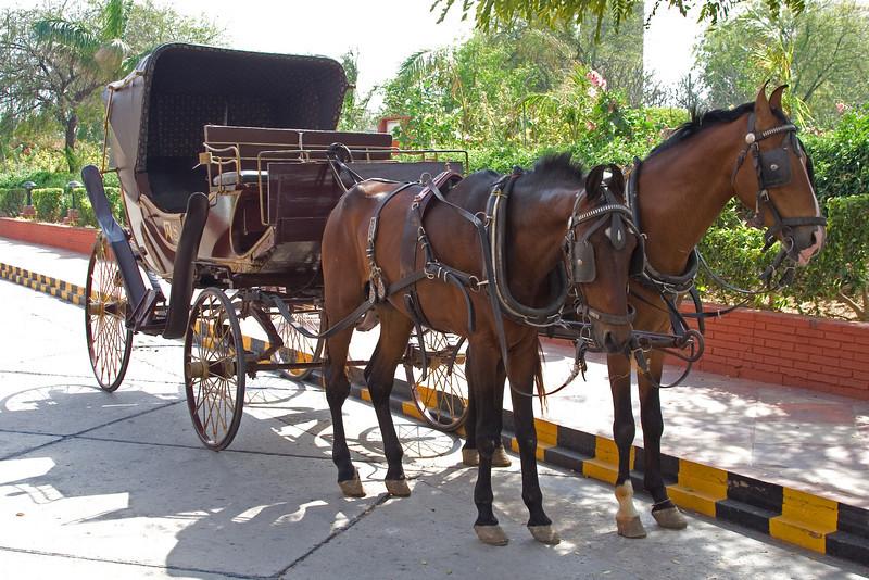 Sheraton Horse and Buggy.jpg