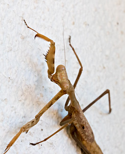 Mantis at the House