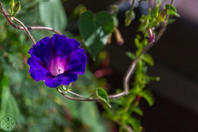 091518 Flowers
