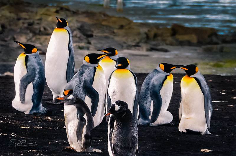 Falkland Is.
