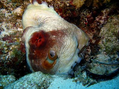 Zanzibar Underwater