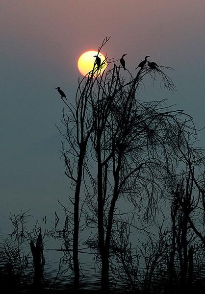 Bird & Sun.jpg