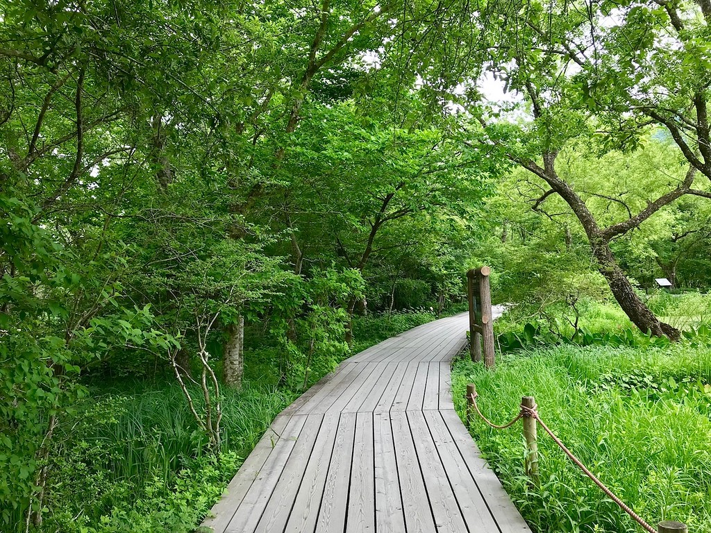 A walkway through the Hakone Botanical Gardens.