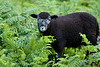 Only Ewe