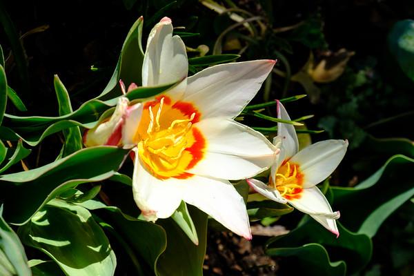 20170309 Albuquerque Botanical Garden