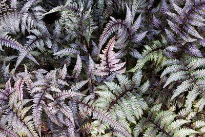 Recent Work - Chicago Botanic Garden