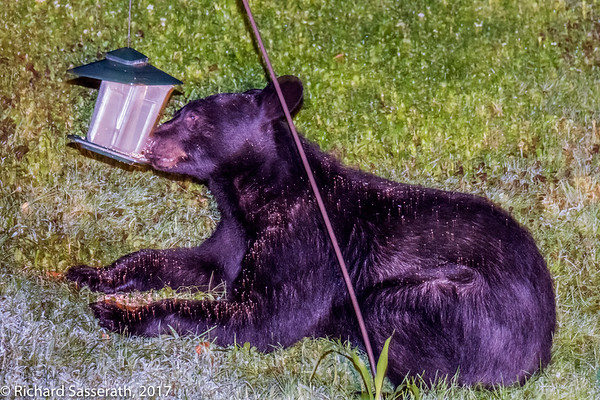 Bear, 8-25-17