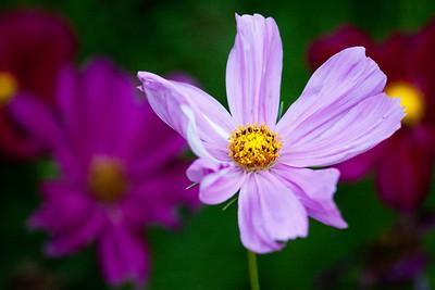 Flowers and Macro