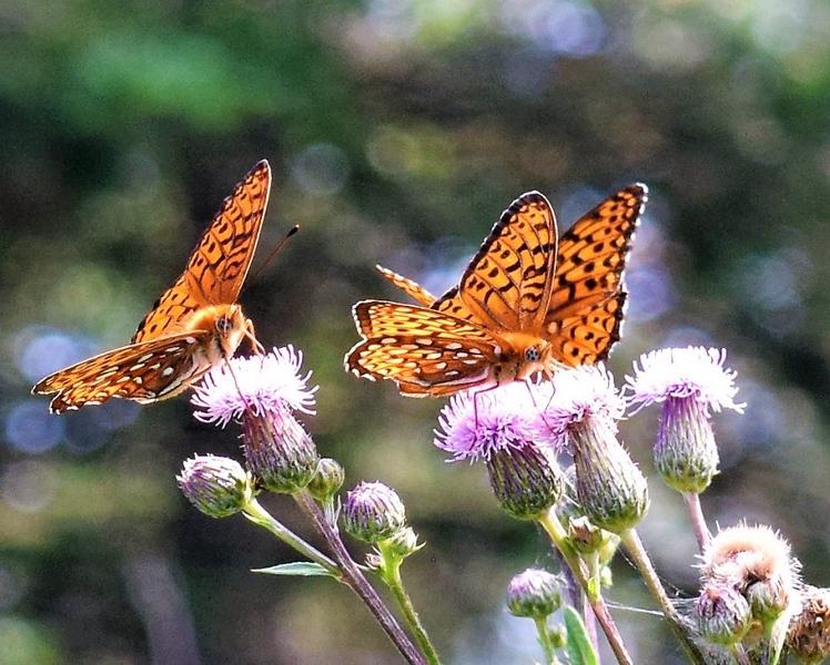 037-J139_Nedohin_YE18OPEN_Colour2-Butterflies_ColourPrint2.jpg