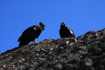 Pinnacles National Park (California)