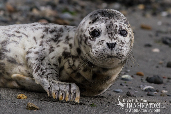 Baby Seals & Wildlife