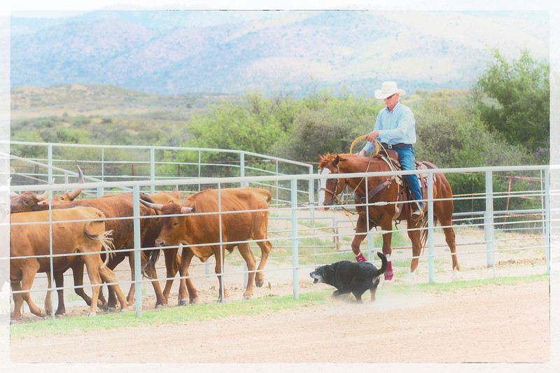 Sunday Roping-07-05-15-07