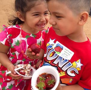 Strawberry Fields 2013