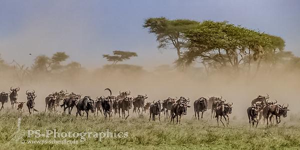 1703_Serengeti