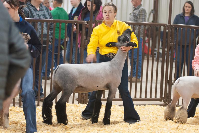 kay_county_showdown_sheep_20191207-28.jpg