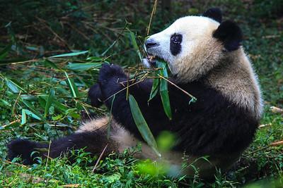 20100922 Pandy w Chengdu