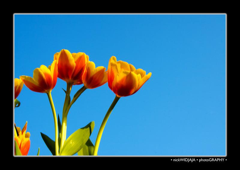 Tulips outdoor_27-Edit2.jpg